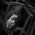 Nature in Black and White - Art Group